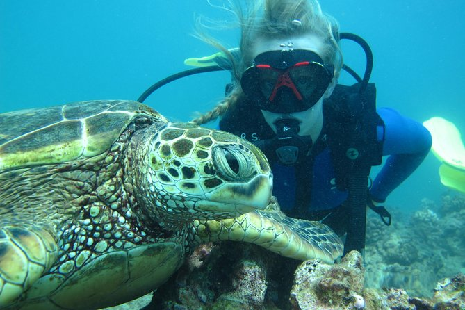 Want to be the part of turtle and shark dive in Maui!!